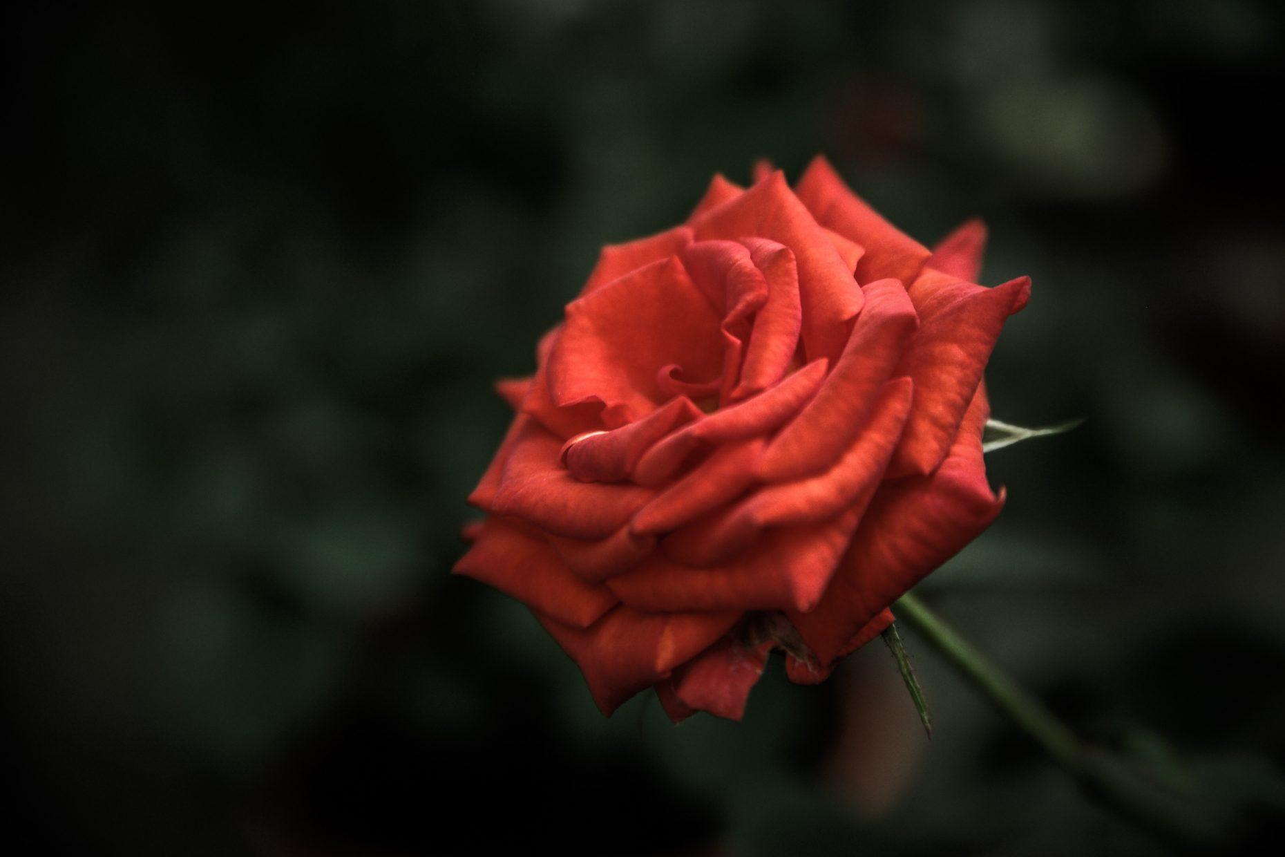 Säg det med en blomma